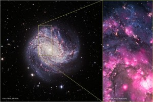 ULX located in M83, a spiral galaxy about 15 million light years from Earth